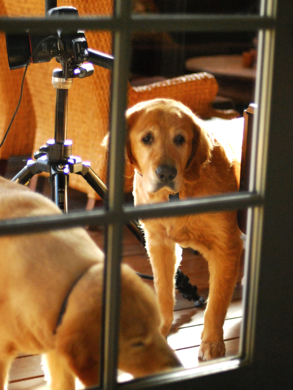 Kim Colby's photogenic pups, Reggie and Charlie, supervising from the porch